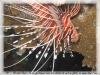 sortieterrainformationphotos22-10-08michaelrard-310